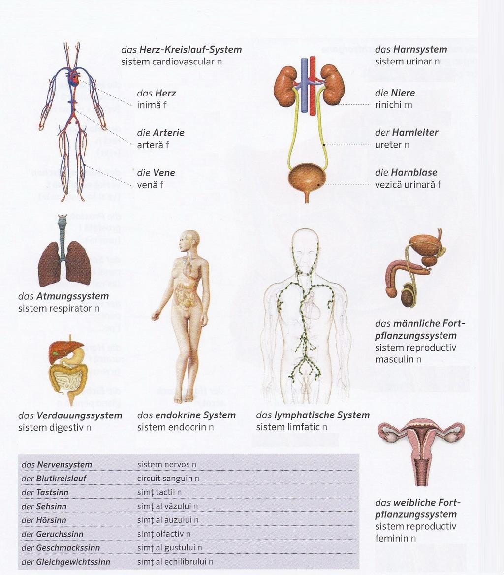 Germana pentru toti - Corpul - Sistemele fiziologice (Der Körper ...